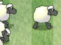Sheep Reactions